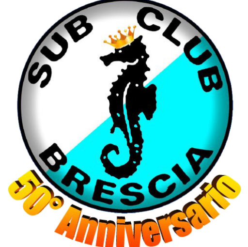 cropped-Logo-50°-21.png